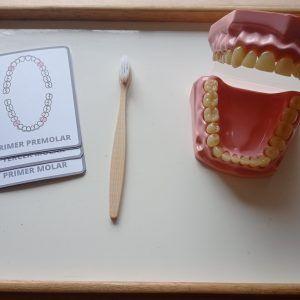 higiene dental vida practica