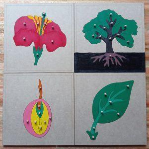 puzle botanica montessori